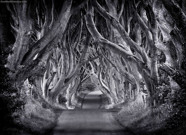 12. The Dark Hedges by Carsten Meyerdierks