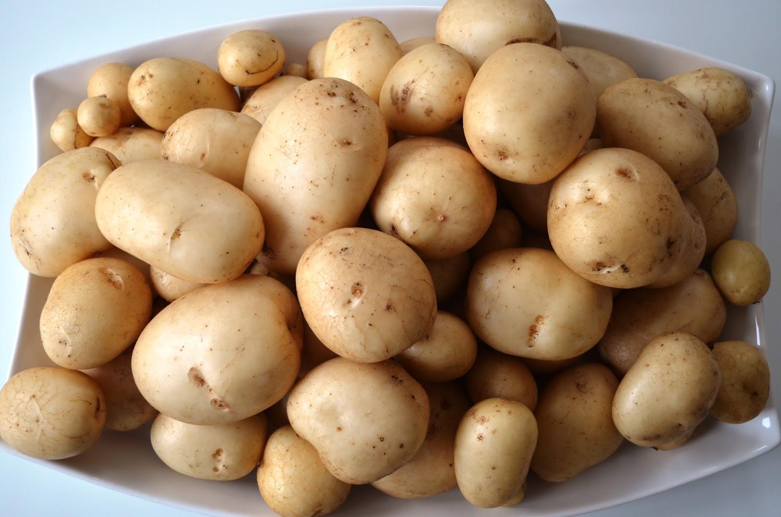 Kelli\'s Northern Ireland Garden: Potato Pentland Javelin Harvest