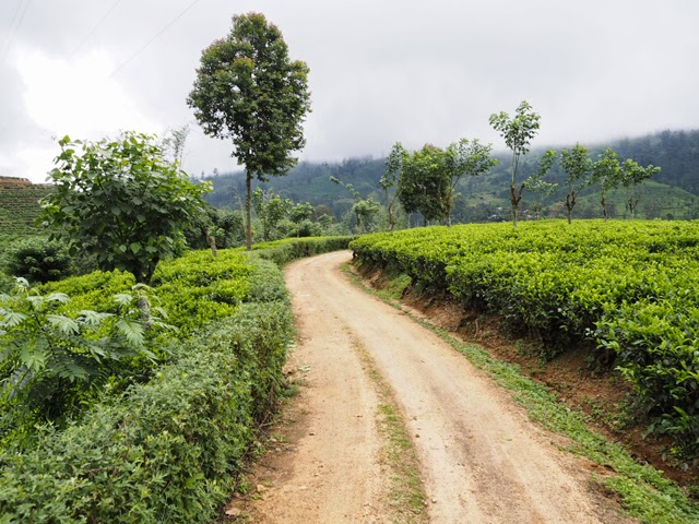 Ceylon Tea Trails