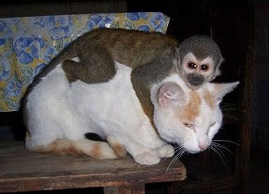 EVIL MONKEY cat