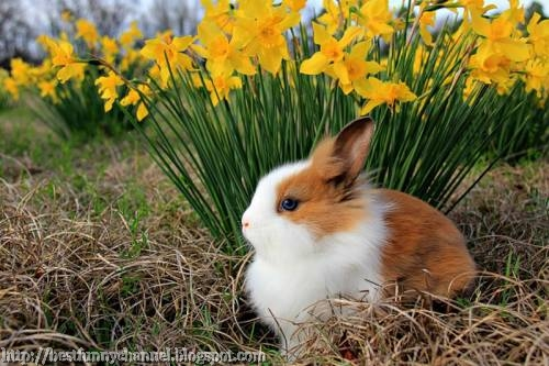 Bunny and flowers.