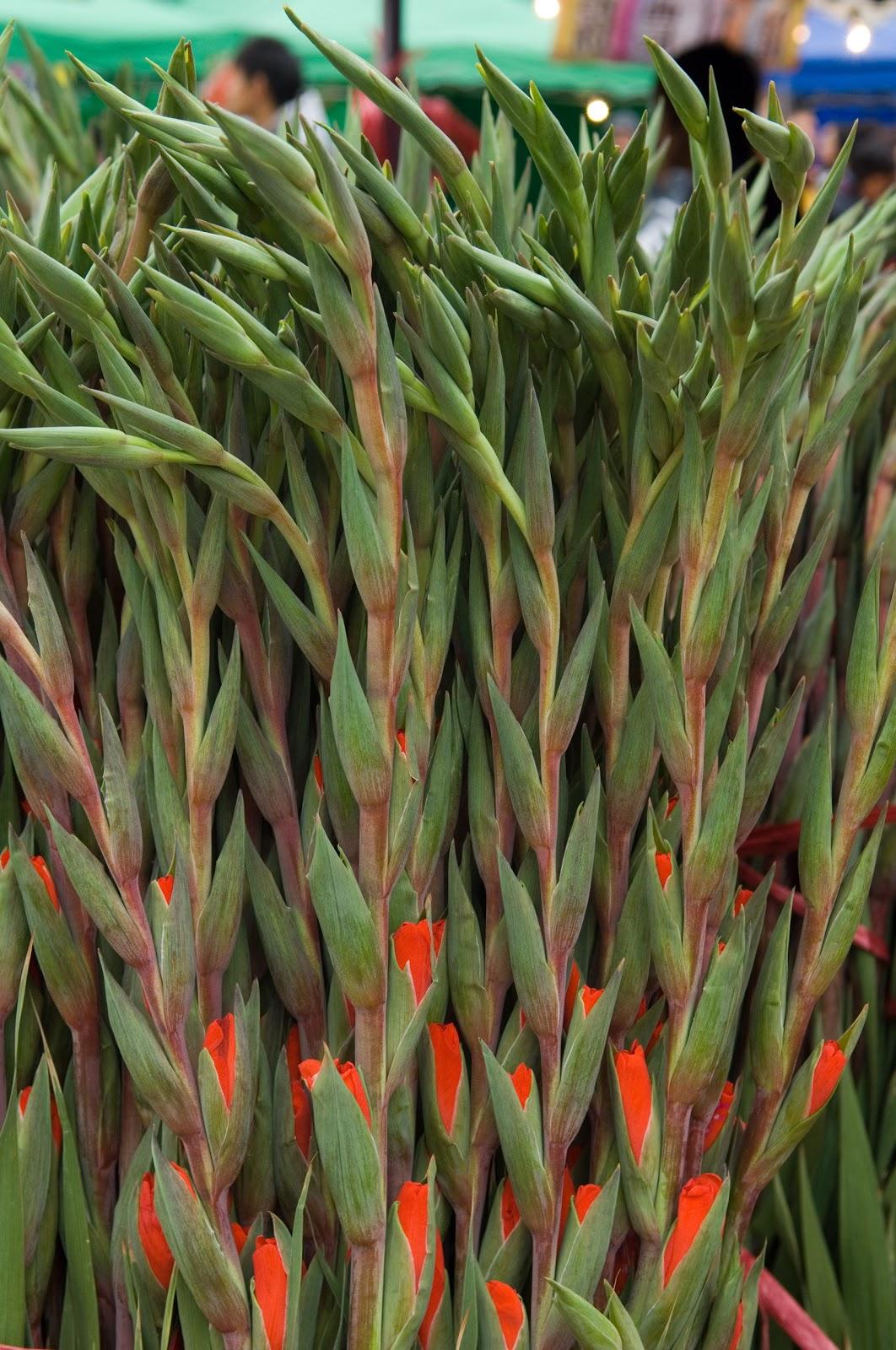 flowers for flower lovers Gladiolus flowers