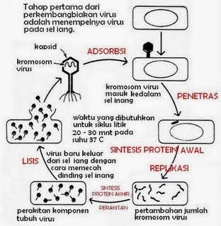 Materi Pelajaran Virus Lengkap