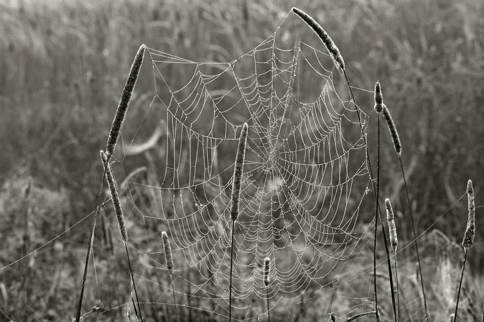Nova Scotia: Spiders; Web