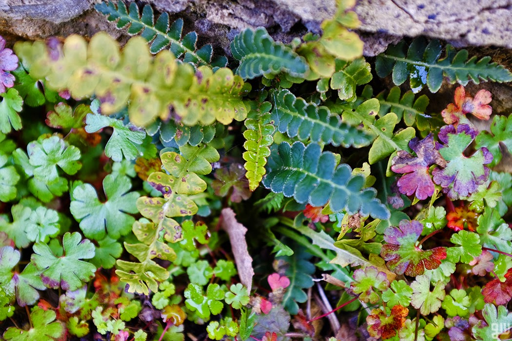Plants in Wall - ©2015 Graeme Walker-Garden Photography,Plants,Geology,Creatures