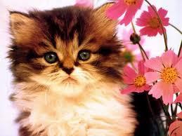 Kucing Yang Comel