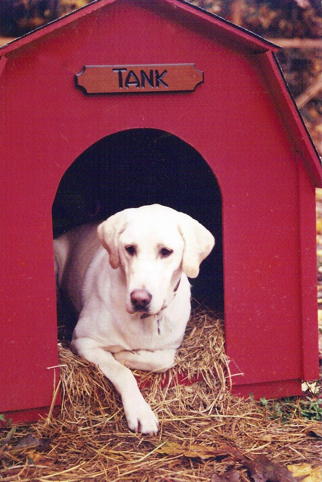 Labrador Retriever Dogs 101 Animal planet dogs 101: