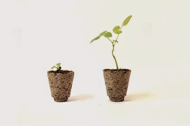 Macetas Fertilizadas y Biodegradables, Opciones Ecoresponsables de Cultivo