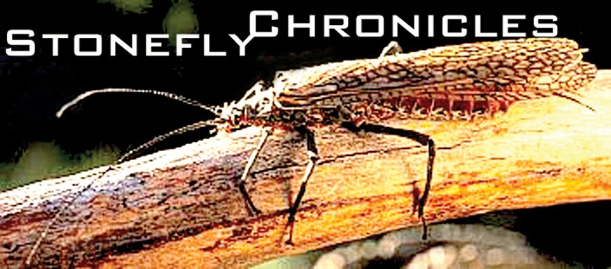 Stonefly Chronicles