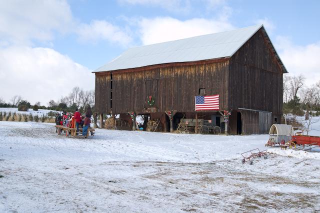 Visual Ohio December 2011 - Becks Christmas Tree Farm