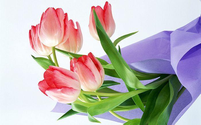 flower wallpaper free latest flowers wallpapers, Beautiful flower