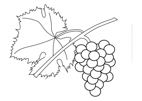 Coloring Pages For Kids Grapes Coloring Pages For Kids