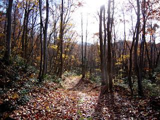 枯れ葉を敷き詰めた林道