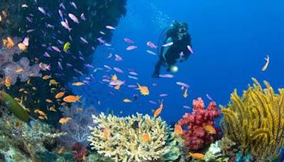 Gambar Pemandangan Bawah Laut Terindah 2013