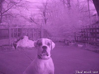 RAW infrared photo dog tree