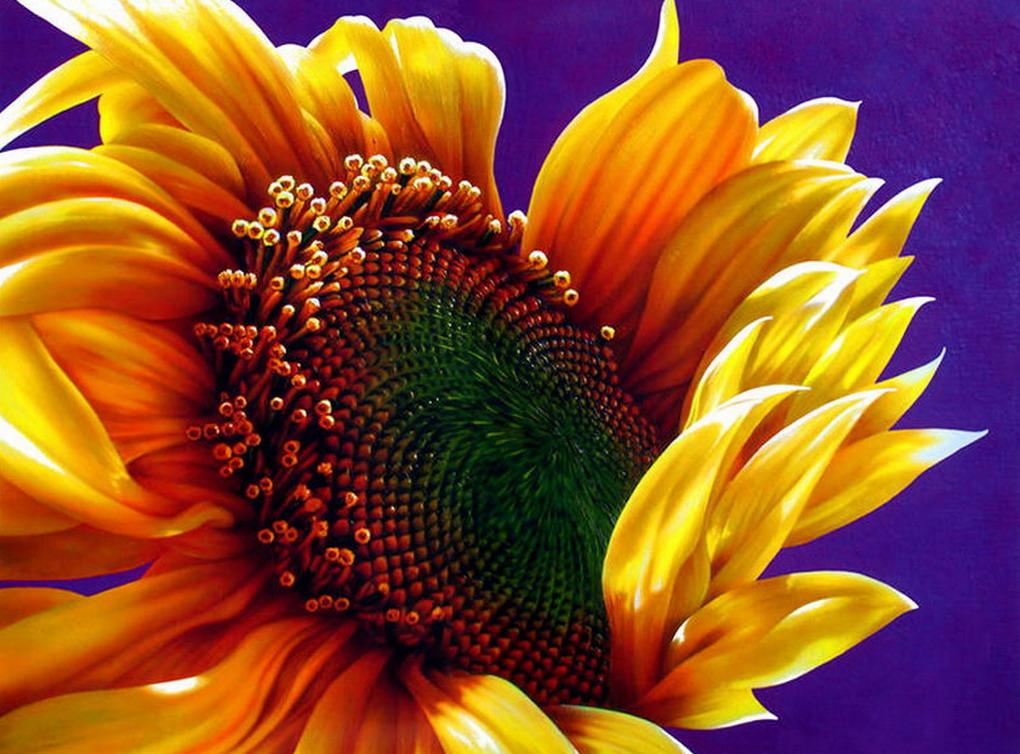 Cuadros modernos pinturas y dibujos cuadros flores - Cuadros flores modernas ...