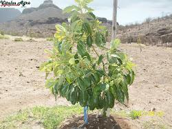 Plantación en el desierto