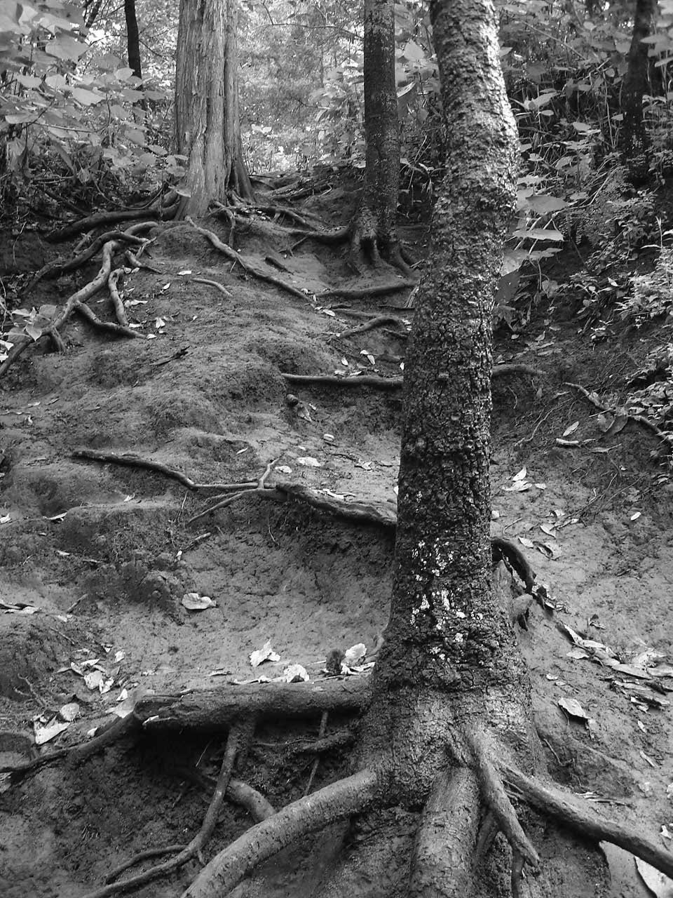 Escaleras naturales