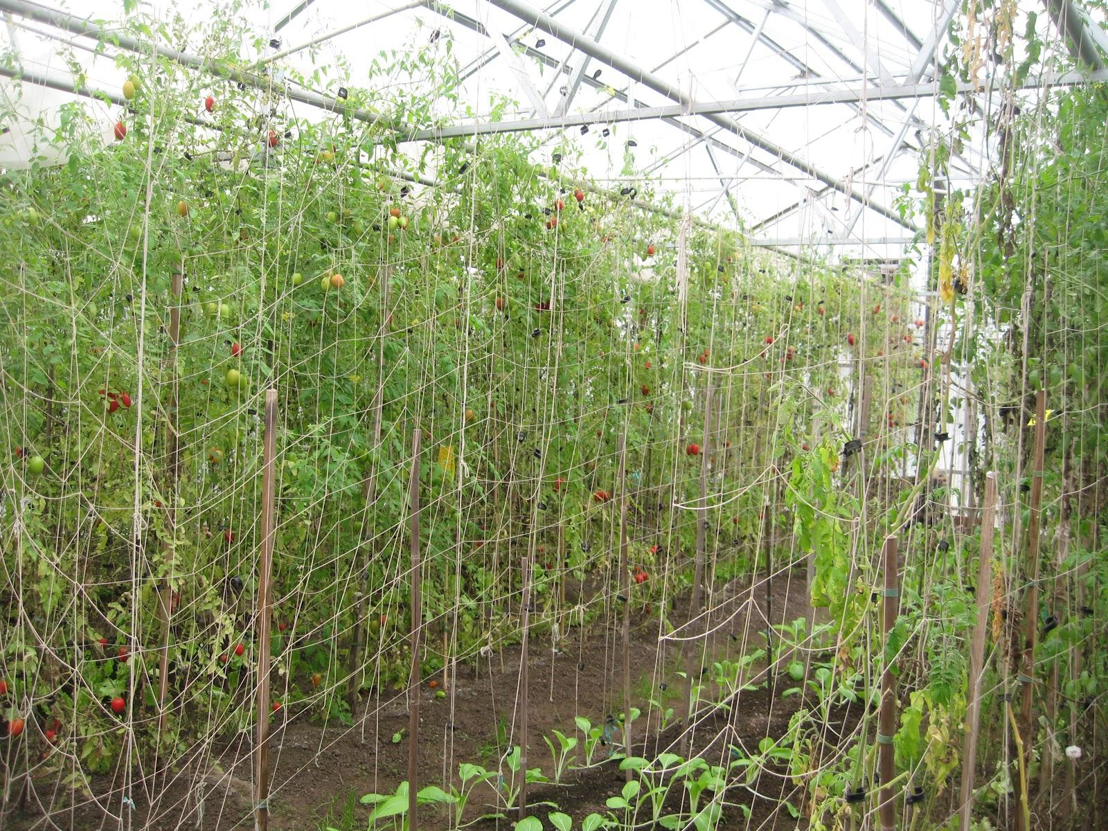 http://2.bp.blogspot.com/-Amof20bUYyU/ULMHLbPOUuI/AAAAAAAAEKk/nHtGkfdyUXE/s1600/garlands+12+043.JPG