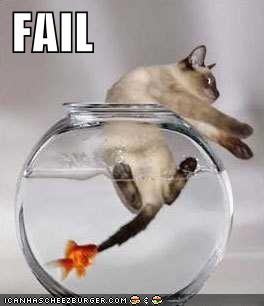 Funny pictures funny fail pics photos images for Cat fishing 2