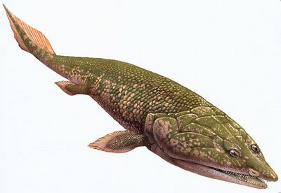 peces del devonico Panderichthys
