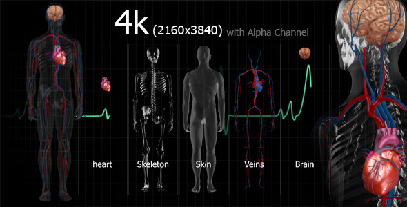 VideoHive Medical Human