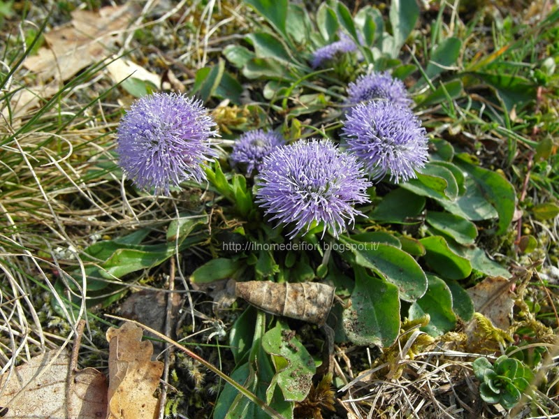 http://ilnomedeifiori.blogspot.it/2014/04/fiori-viola-chiaro-sulla-roccia.html