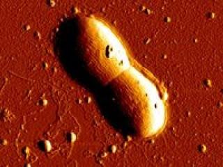 Bakteri Di Dasar Laut Memiliki Dna Yang Berbeda [ www.BlogApaAja.com ]