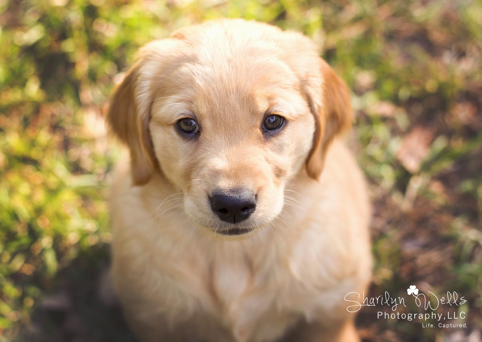 Sharilyn Wells Photography A Pup Named Nala Pet Photography