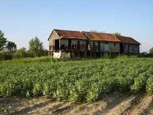 Casas de Avieiros