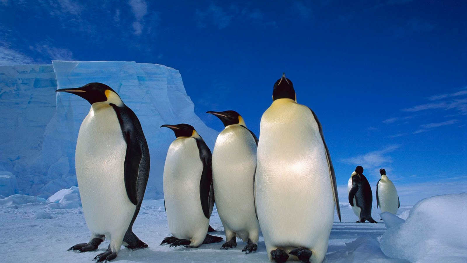 Penguin desktop wallpaper hd - photo#5