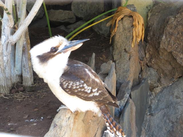 bird palmitos park gran canaria