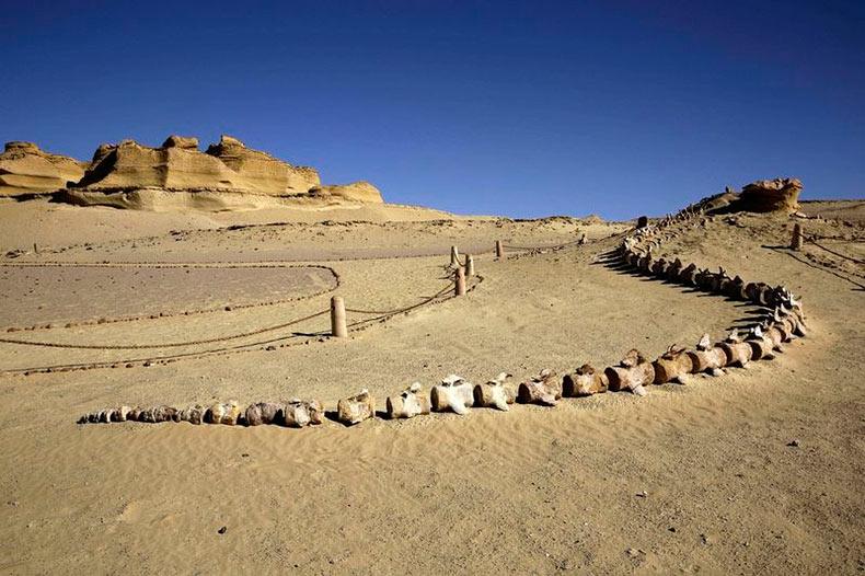 Antiguo lecho marino se convierte en el hogar del primer Museo de Fósiles del Oriente Medio | Egipto