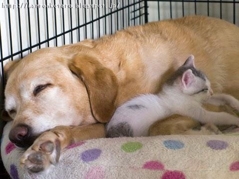 子猫と犬のお昼寝 dog and kitten sleeping