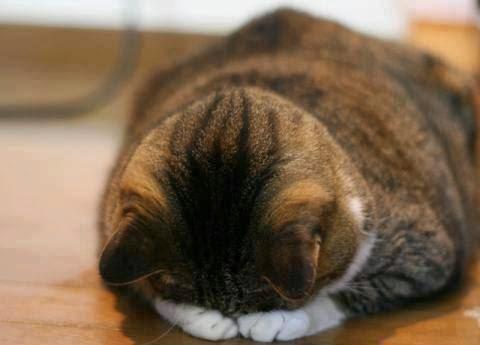 Gambar Lucu Kucing Galau Sedih