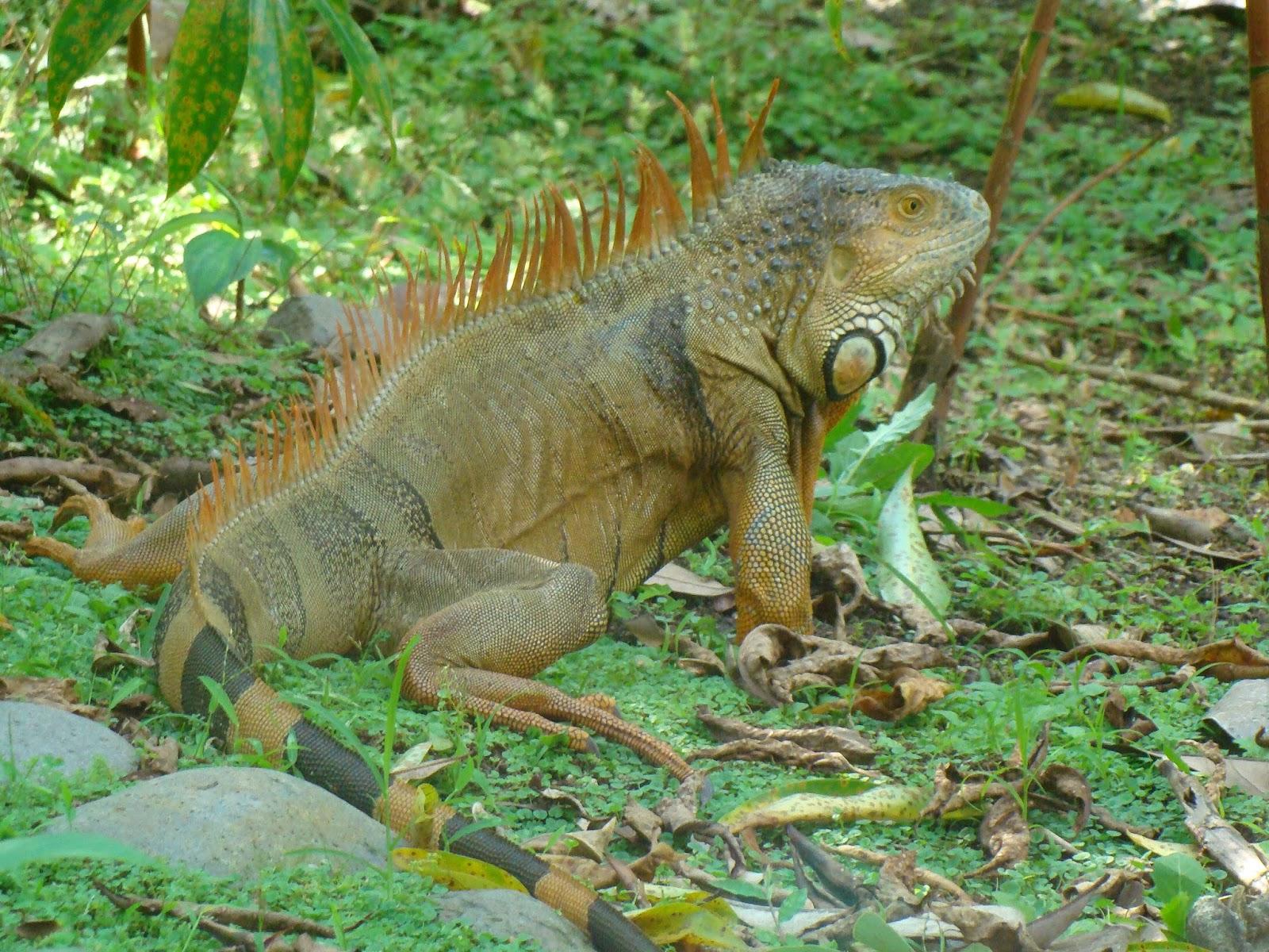 Tierra de collares jard n bot nico la laguna fauna for Lagunas de jardin