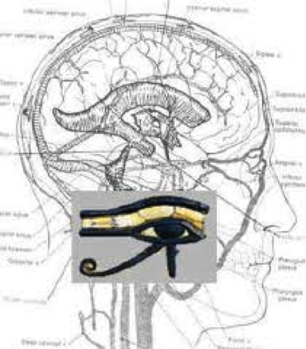 pineal gland portal of higher dimensions riseearth