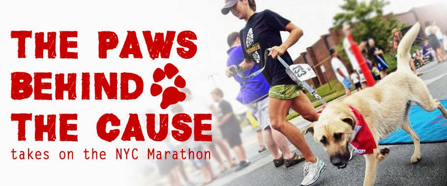 Paws behind the Cause takes on the NYC Marathon
