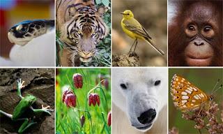 Why Biodiversity Matters, John Muir Quote