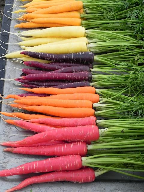 http://2.bp.blogspot.com/-Apb85nfBkCs/UL_cWLxmihI/AAAAAAAADHk/1ZzJGi_94eY/s320/Carrot,+Yellow+Pak,+Sherbert,+Cream+Pak,+Purplesnax,+Sugarsnax+54,+Nutri-Red,+110512+(7).JPG