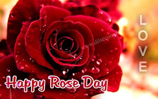 happy rose day images for whatsapp