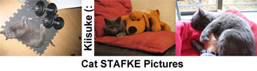 Cat Stafke Pictures
