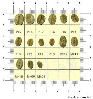 咖啡技藝分類標準尺寸