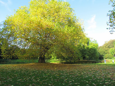 tree, sunshine, sky, fall, Autumn, walk, Fall, UK, England, Countryside, green, brown, colourful, Audley End, Autumnal, peaceful, crisp, Thomas Howard,