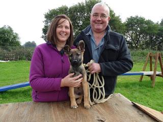 German Shepherd puppy with walkers