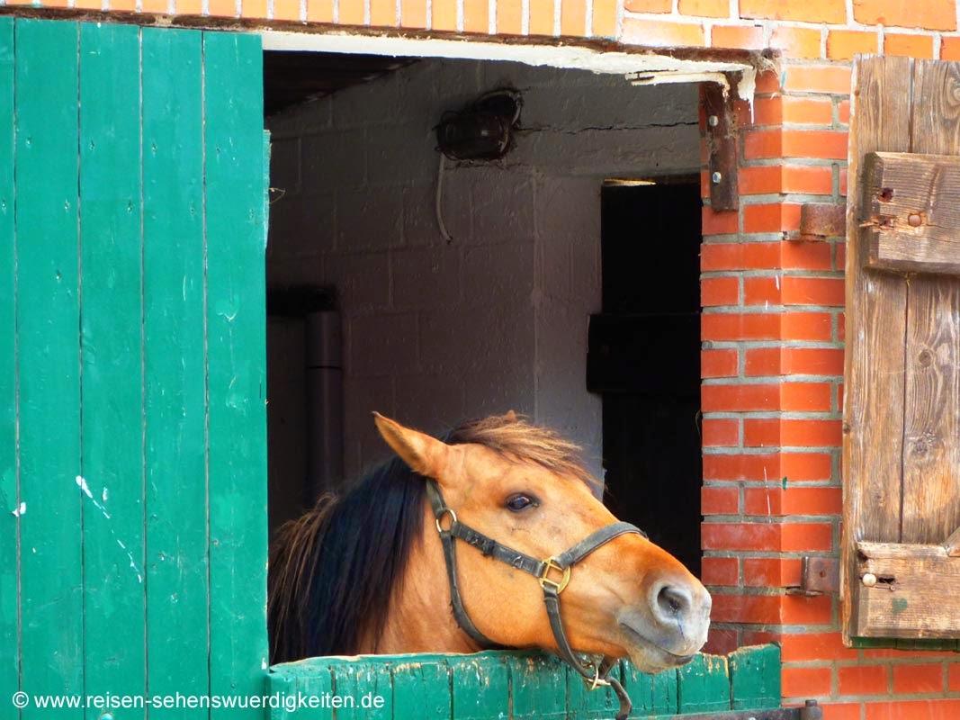 Ponyhof Reiterhof Schleswig Holstein, Pony im Stall