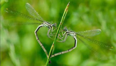 Experiências sugerem que insetos têm sentimentos