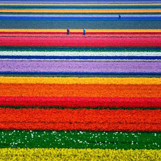 Flowers Garden Netherlands