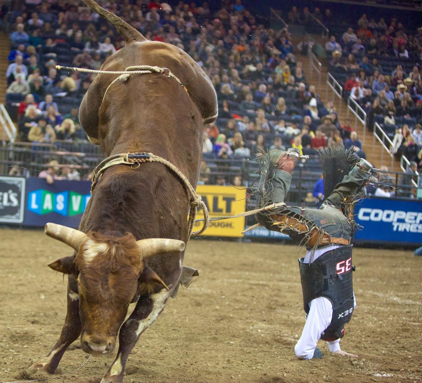 Bull riding pbr