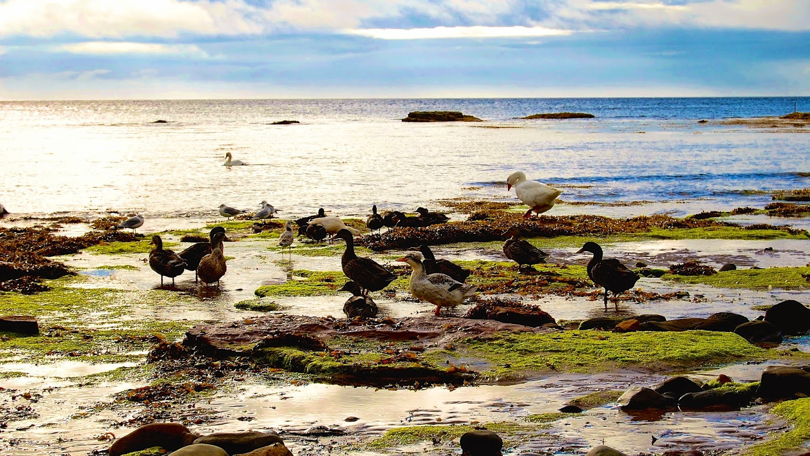 Swans, ducks, and seagulls in the bay